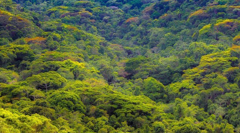 Niterói ganha o Parque Natural Municipal Floresta do Baldeador - Niterói